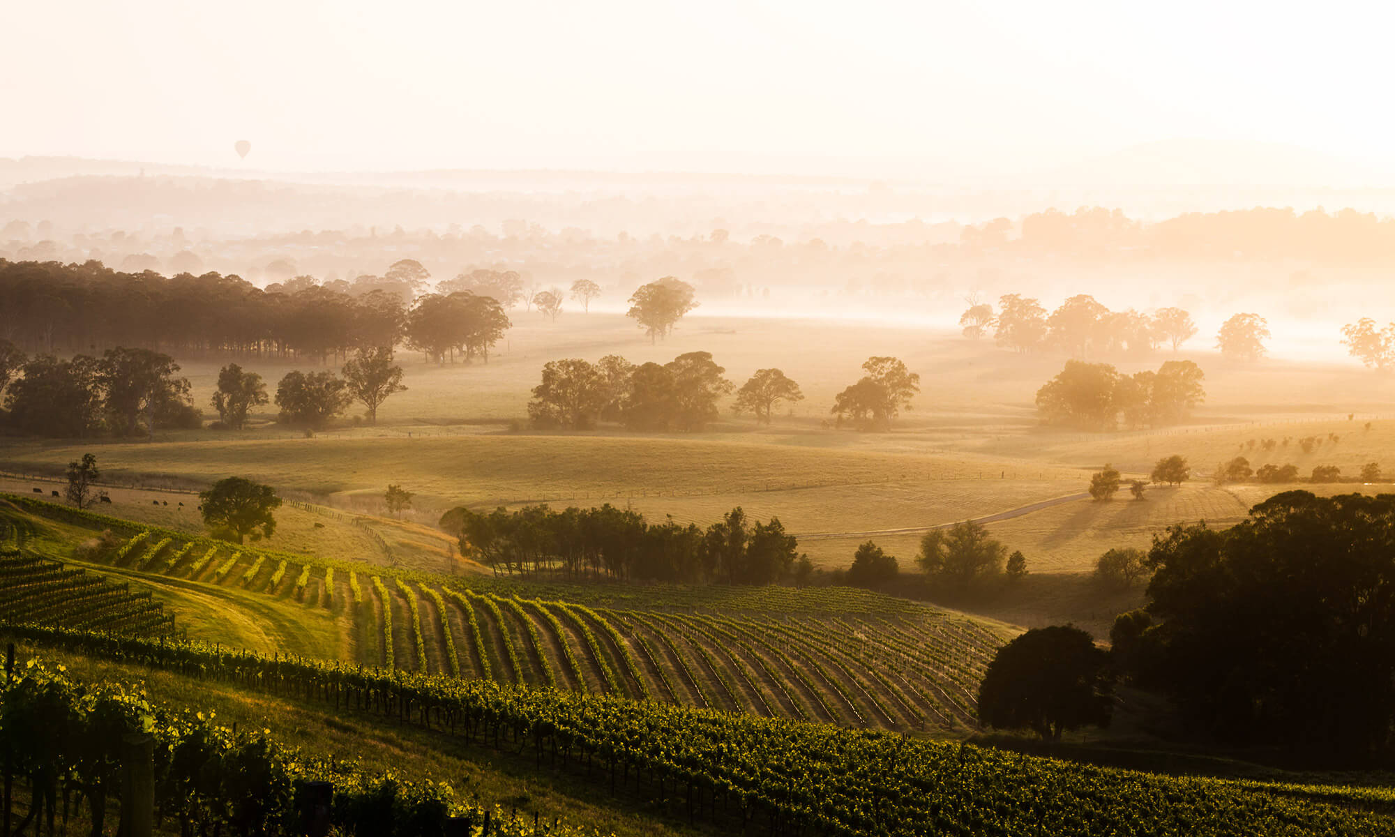 hunter valley wine tour private plane hire package